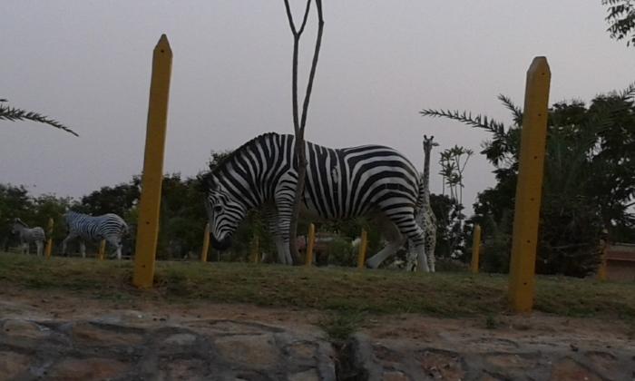Z for Zebra ...